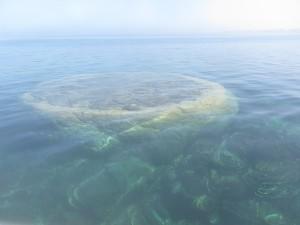 Difficile d'avoir une mer plus calme et du corail plus flamboyant de vie