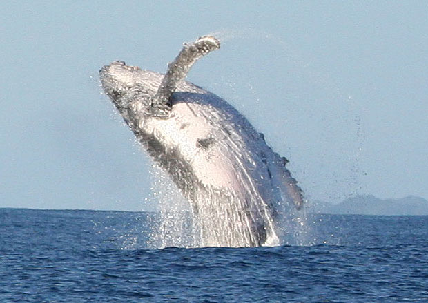 baleines à Madagascar