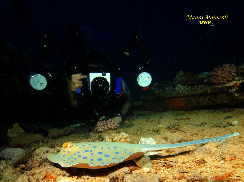 la photographie sous marine possible grâce à la plongée