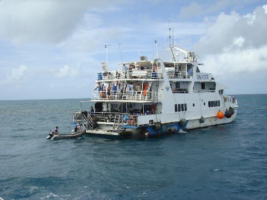 Travailler à Cairns : être bénévole avec Cairns Dive Center