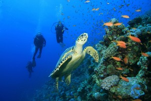 La côte Yucatan, détendeur en bouche!