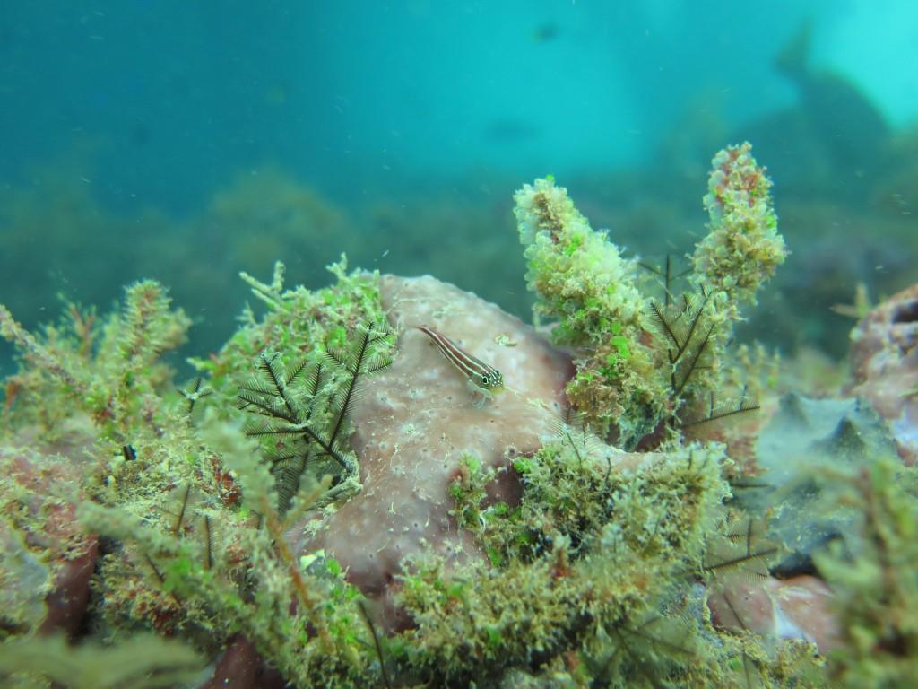 La vie secrète du corail