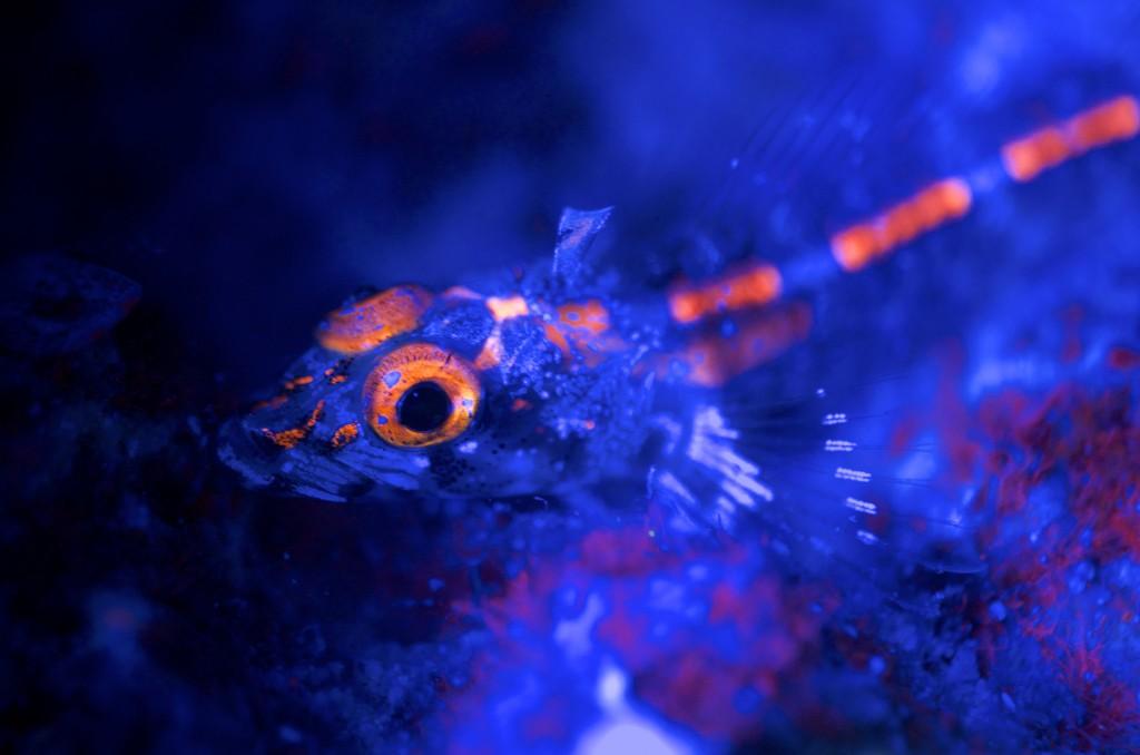 Découvrez les meilleurs photos de Bioluminescence sous marine!