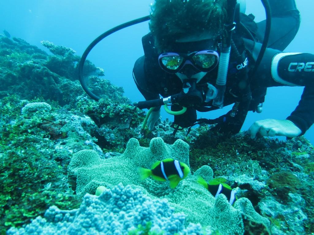 La plongée en Indonésie