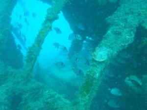 HMS_MAORI_MALTA_DIVING (3)