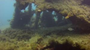 HMS_Maori_wreck